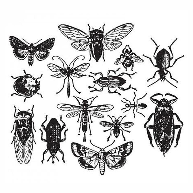 סט חותמות סיליקון - entomology
