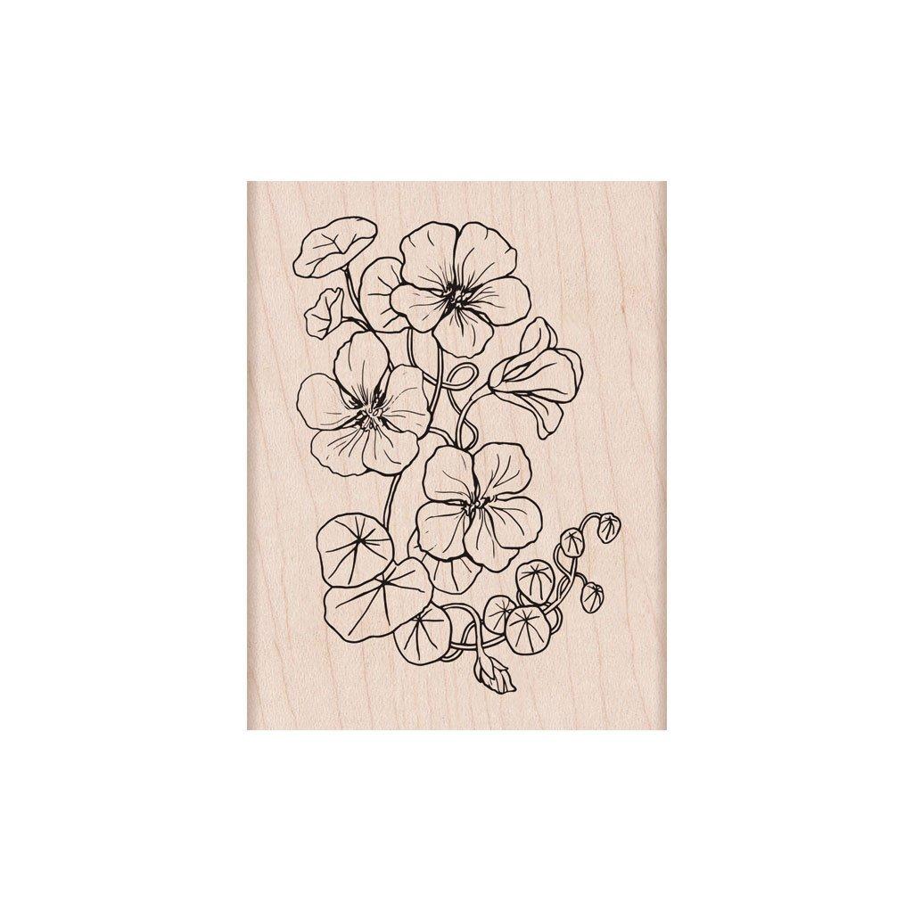 חותמת עץ- FLOWERING NASTURTIUM